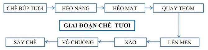 san-xuat-tra-o-long-1